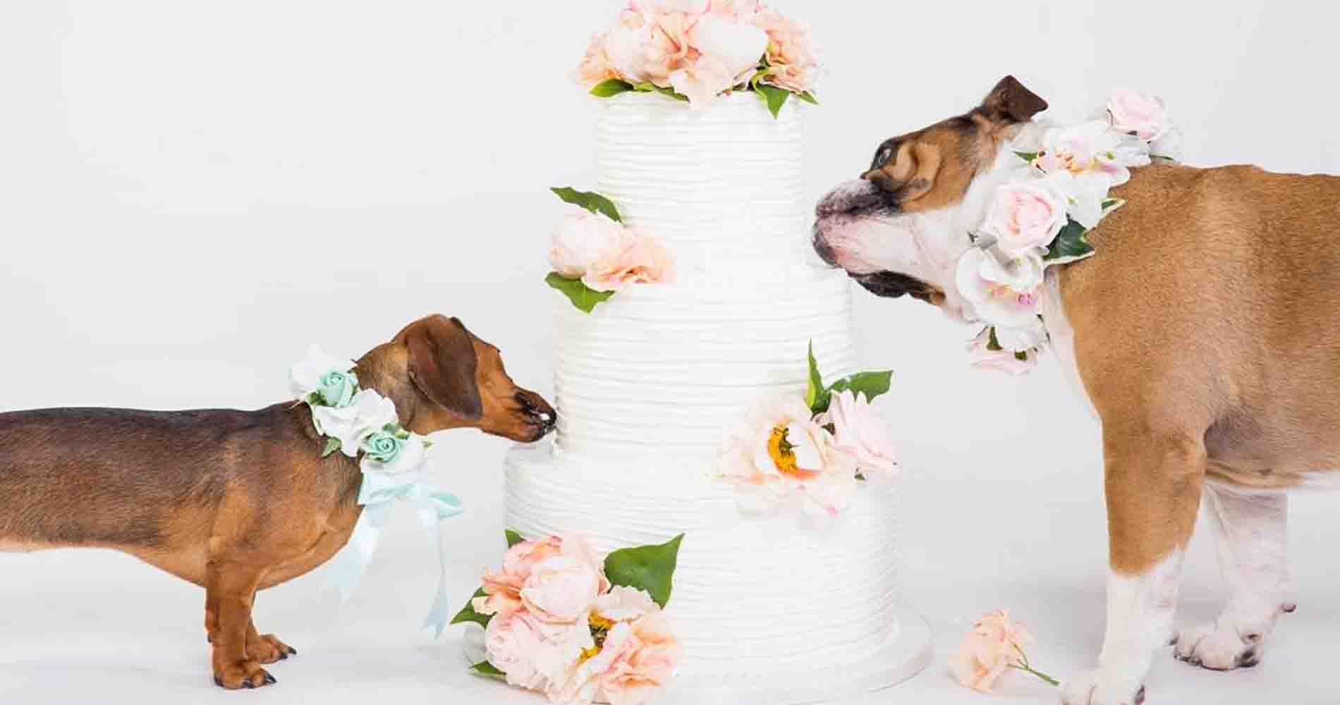 Cupid Collar Dogs With Cake